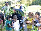 Dia da Árvore: ações para uma Gramado mais verde